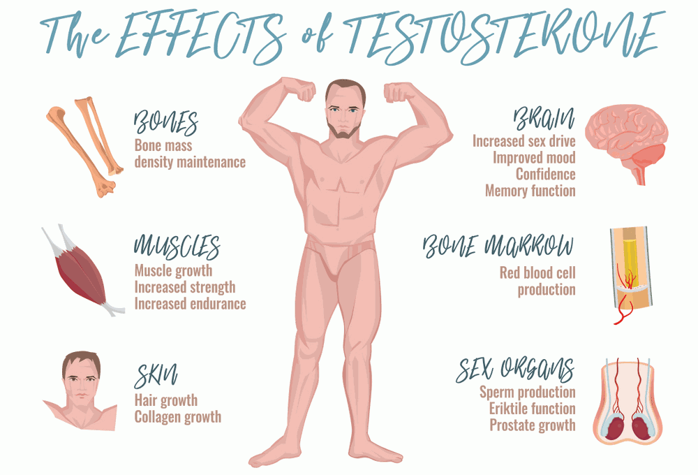 Testosterone effects Infographic