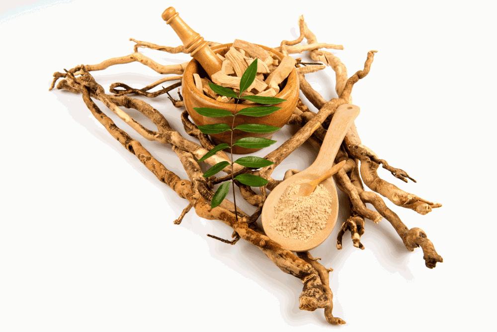 Tongkat Ali, roots & green leaves